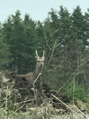 小鹿が餌を求めて!