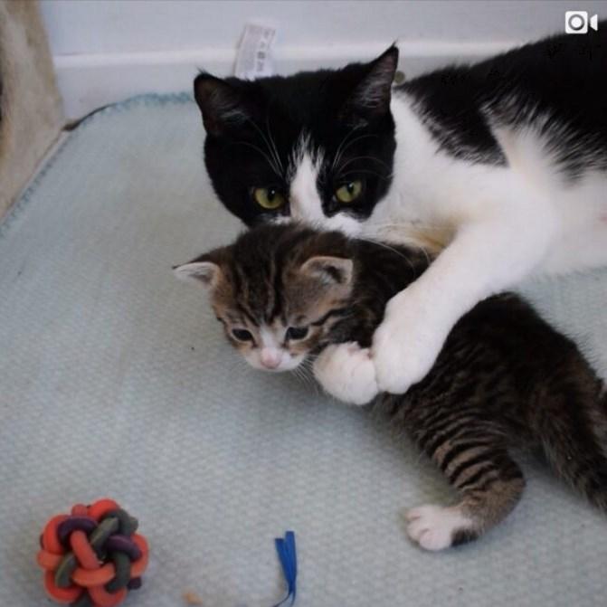 子猫を溺愛する母猫がたまらん