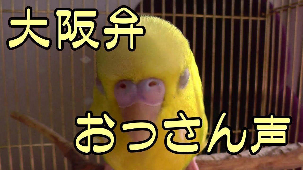 この関西弁を喋るインコ受ける!