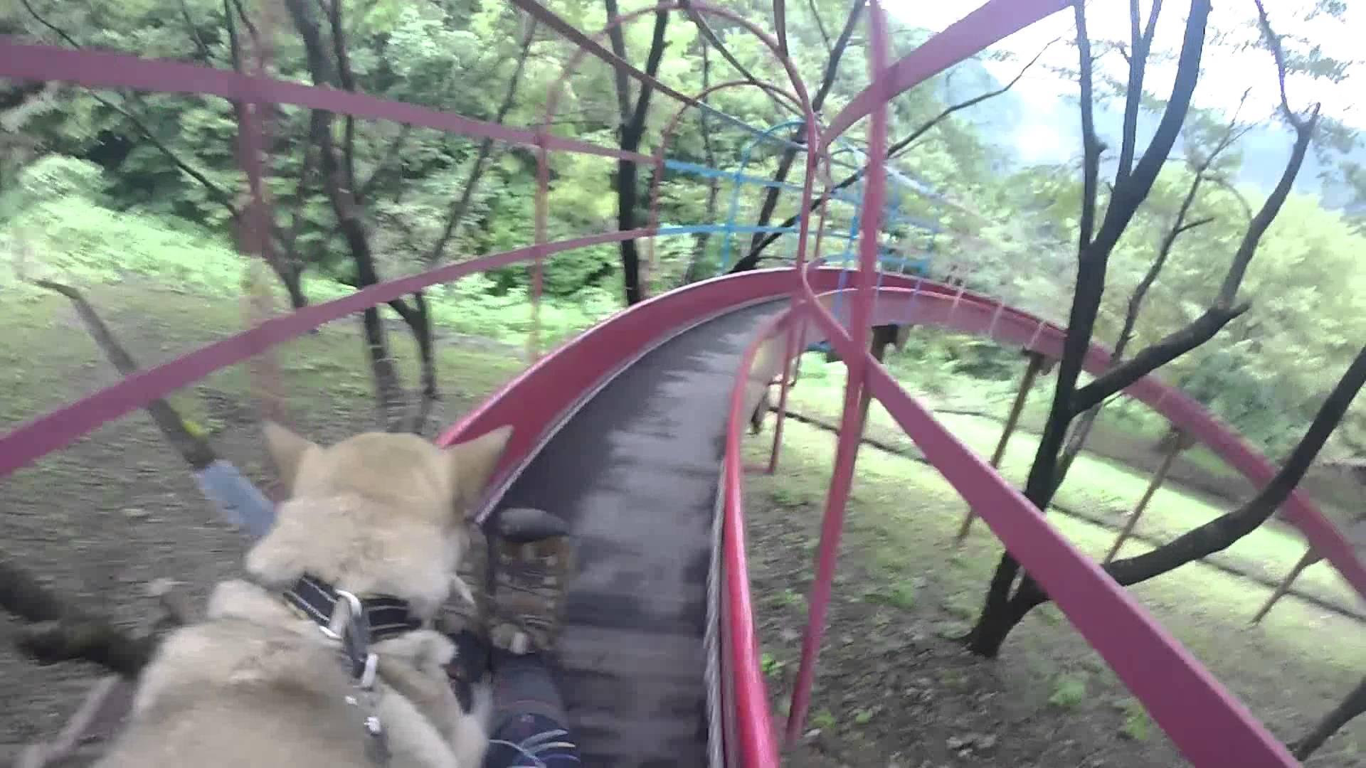 【犬のおもしろ動画】犬と滑り台~The slide with a dog~