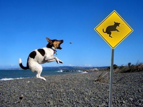 犬 おもしろ画像集 Funny image collection of dog 有趣的狗