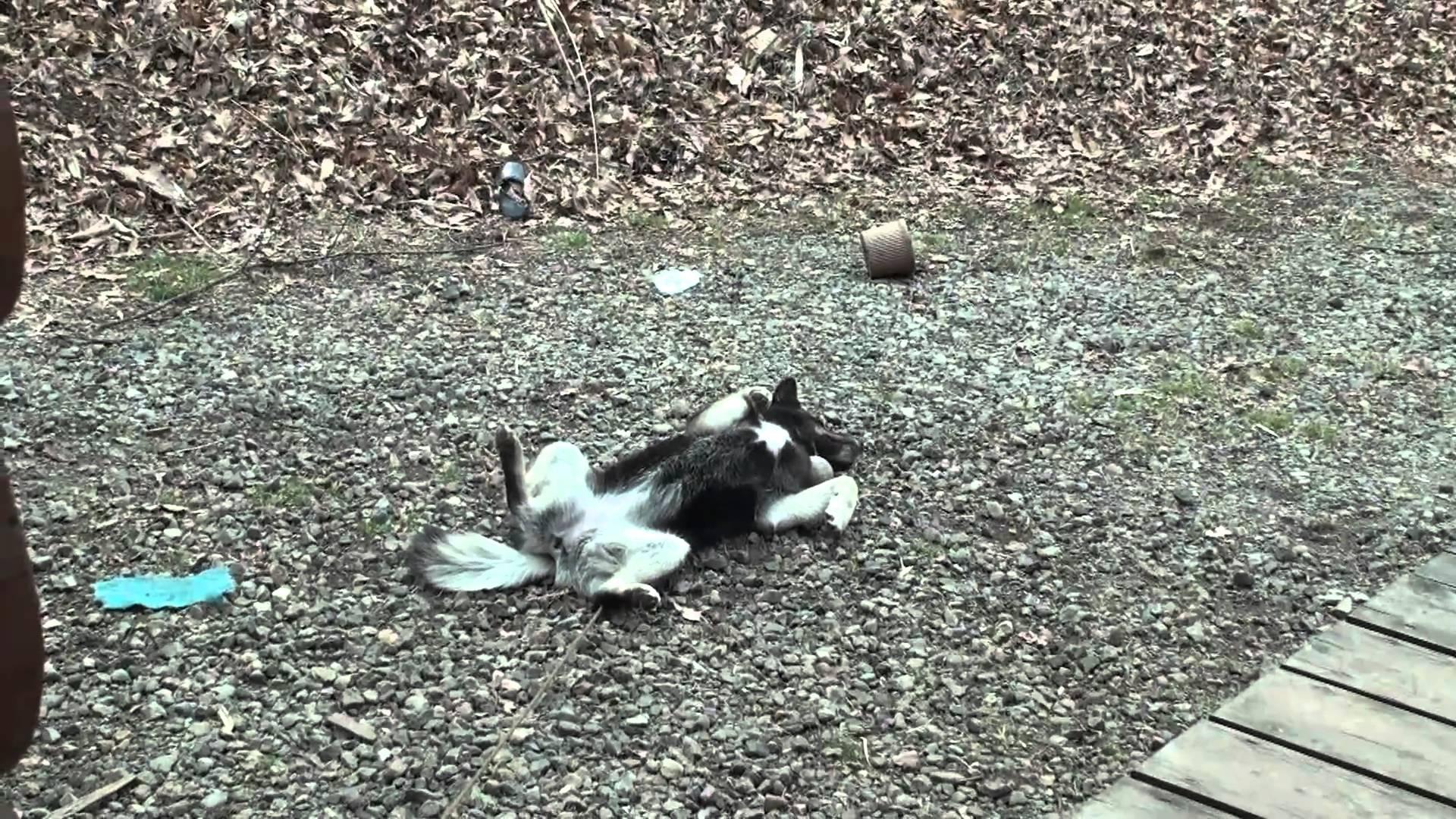 おもしろ動物 昼寝 東北地震 DOG 犬